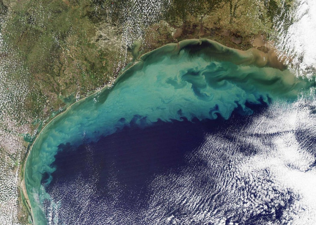 low-oxygen zone, Gulf of Mexico, National Oceanic and Atmospheric Administration, Louisiana State University, Louisiana Universities Marine Consortium, environmental deregulation, Steve Scalise, Bill Cassidy, agricultural runoff, dead zones