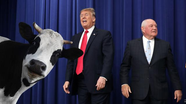 The Trump administration has worked closely with the dairy industry, at a time when the president's trade war has hurt farmers. Photograph: Chip Somodevilla/Getty Images